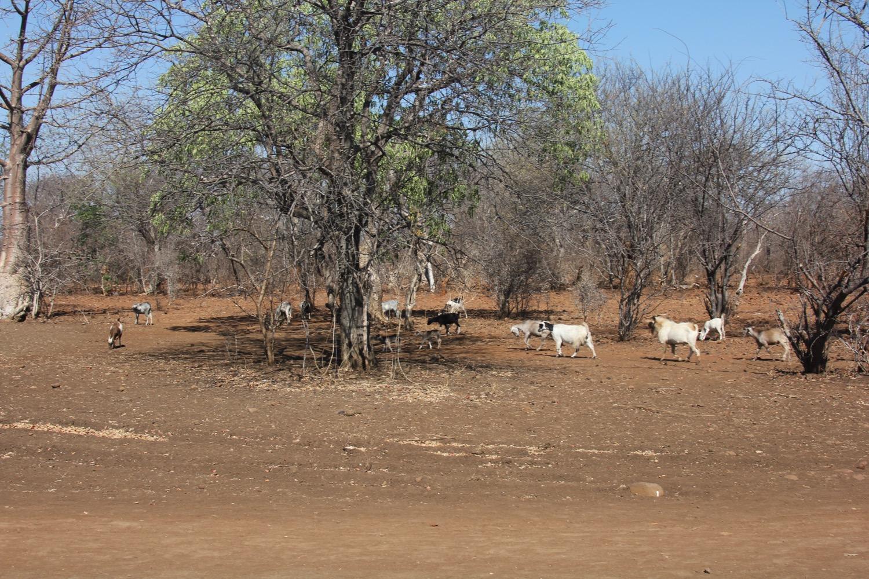 Namibia - 14