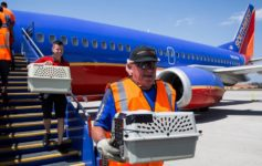 Southwest Airlines Emotional Support Animal Rules