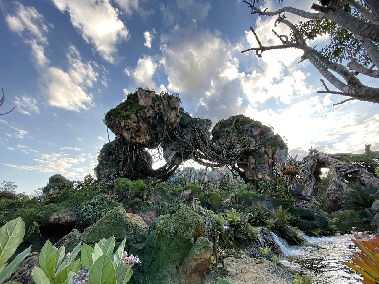 Pandora at Disney's Animal Kingdom